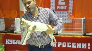 Выставка кошек ICU, Краснодар / CAT-SHOW ICU, Krasnodar 2015