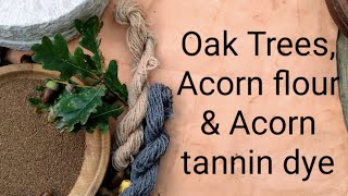Oak trees, Acorn flour & dye