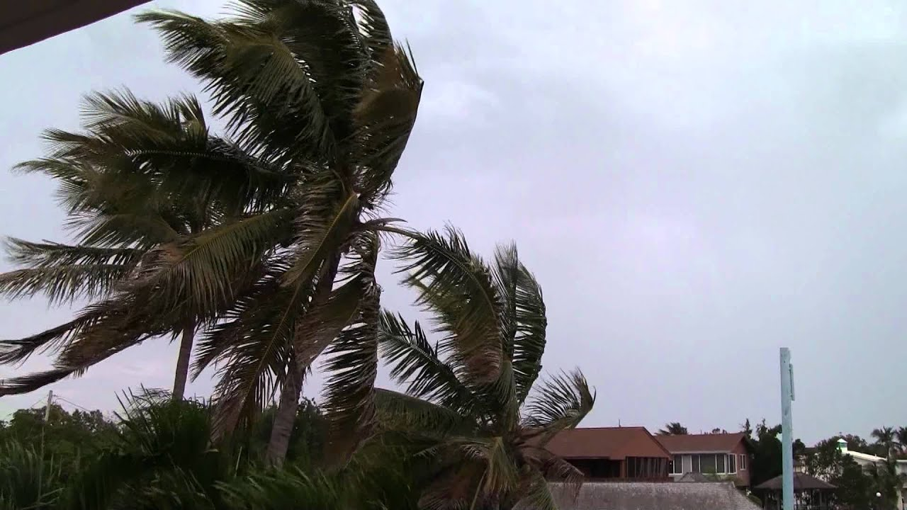PALM TREES BLOWING IN THE WIND - YouTube