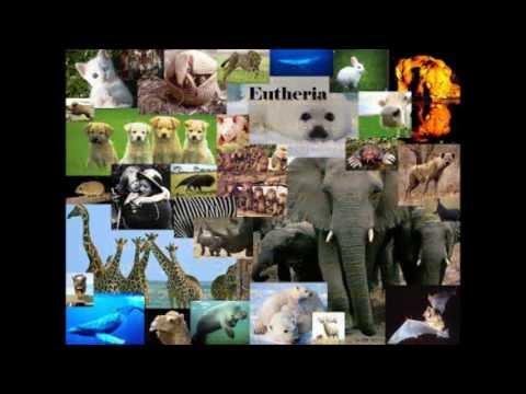 Placental Mammals by Michael Stewart