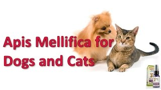 Apis Mellifica For Dogs And Cats
