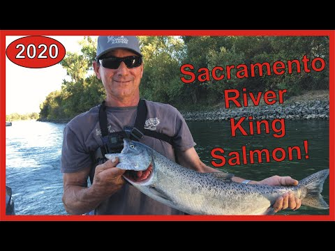 Sacramento River Salmon Fishing Report 2020: Fish On! And More Giveaway!