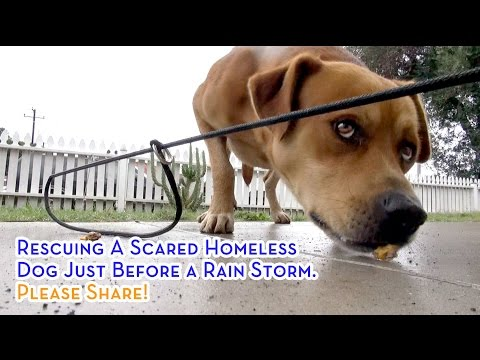 Rescuing A Scared Homeless Dog Just Before A Rain Storm. Please Share!