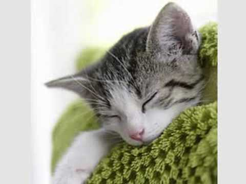 Beethoven for Cats! Create a Tranquil Cat Environment
