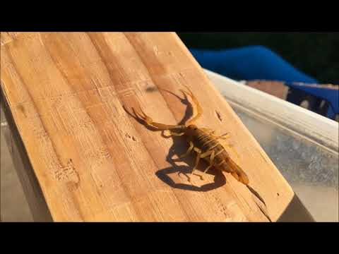 "Scorpion safe ""safer"" Home - pest seal your home - pest control"