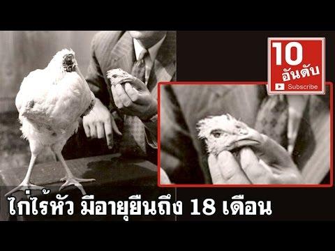 ตำนานไมค์ ไก่ไร้หัว Mike The Headless Chicken Day