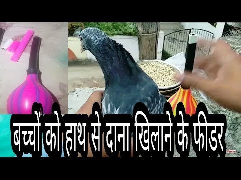 how to make pigeon feed
