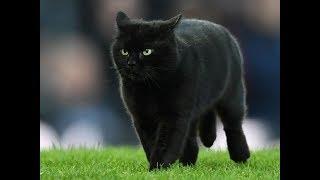 Cat invades pitch at Everton v Wolves!