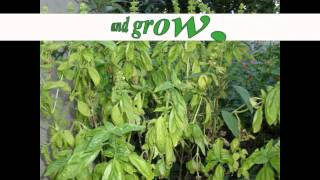 Growing Vegetable Soup.flv