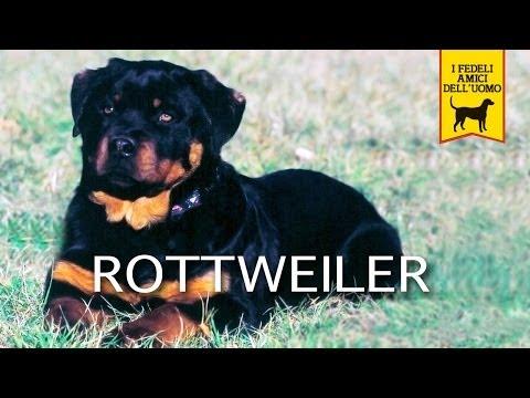 IL ROTTWEILER – Trailer documentario