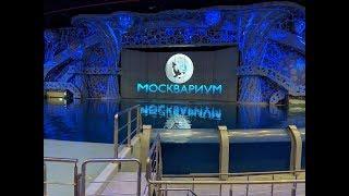 """Шоу """"Сон в летнюю ночь"""" Москвариум"""