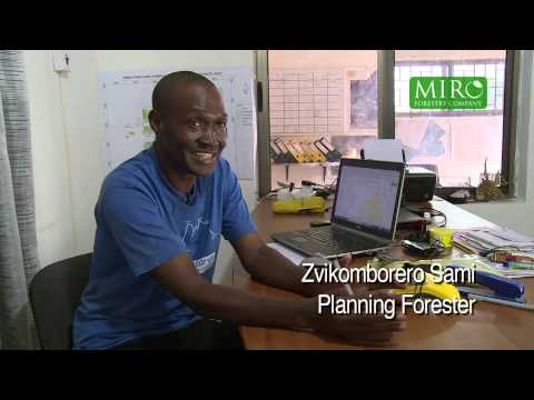 Miro Forestry – Company Overview