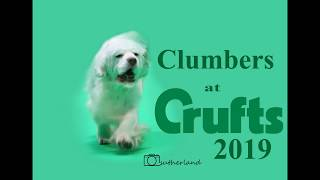 Clumbers at Crufts 2019