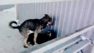 И у собак бывает..конч:D