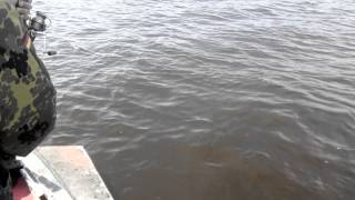 Подсак подвел(Сорокошичи Черниговская область., 2014-06-23T06:42:53.000Z)