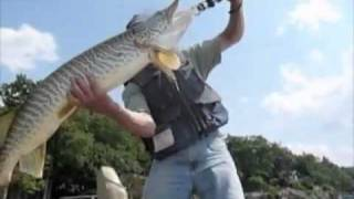 The Center For Animal Behavioral Research : Greenwood Lake, N.j. Musky Fishing - Jeffrey Loy