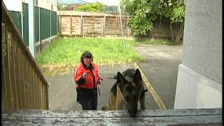 Search & Rescue Dog Training