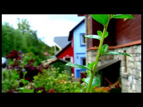 The Journey - The Park - Findhorn Foundation