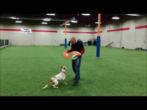 Freestyle disc dog Hydro with Jonathan Offi