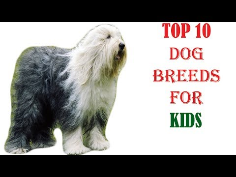 Top10 Dog Breeds For Children l Dog Love Planet