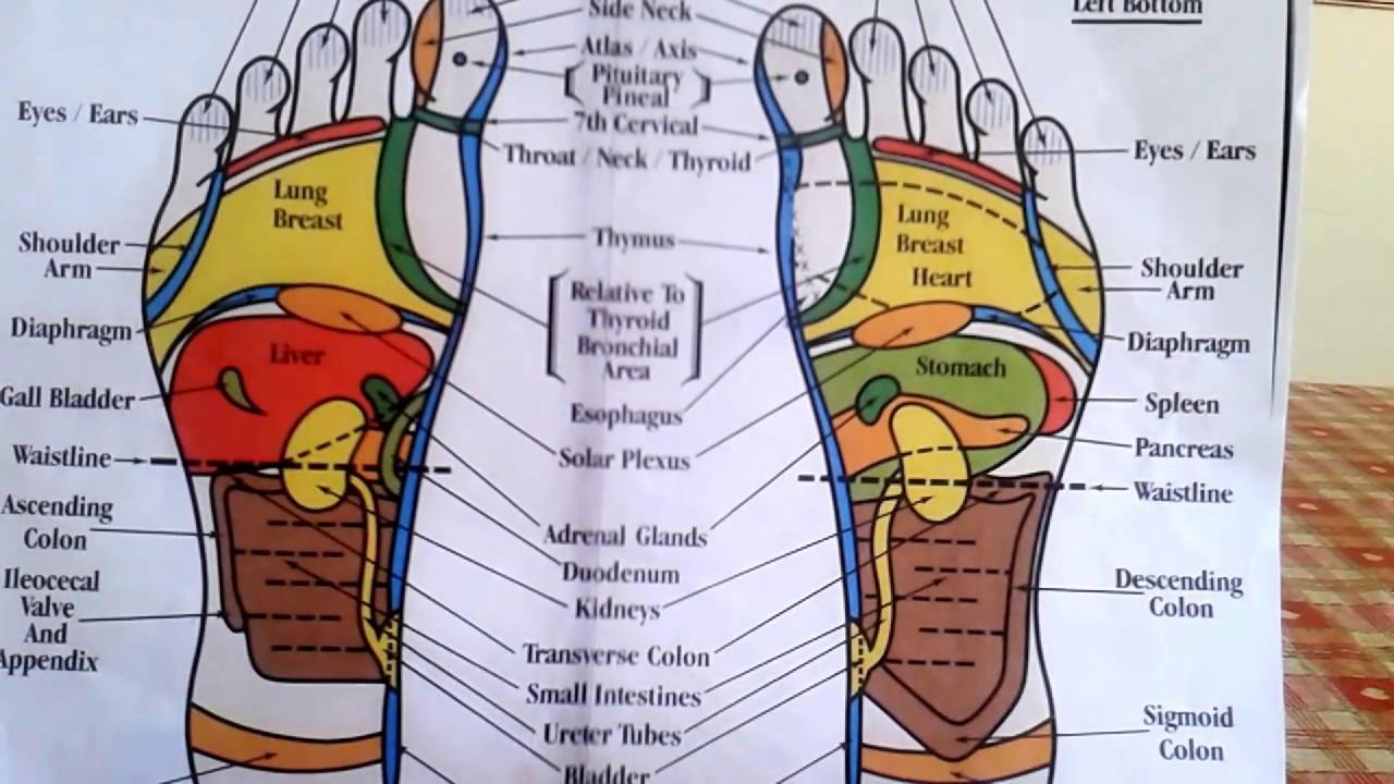 Reflexology How To Read A Foot Reflexology Chart Youtube