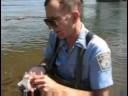 Mysterious fish kills in the Susquehanna