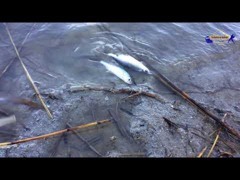 Рыбалка в краснодарском крае с брыньковская