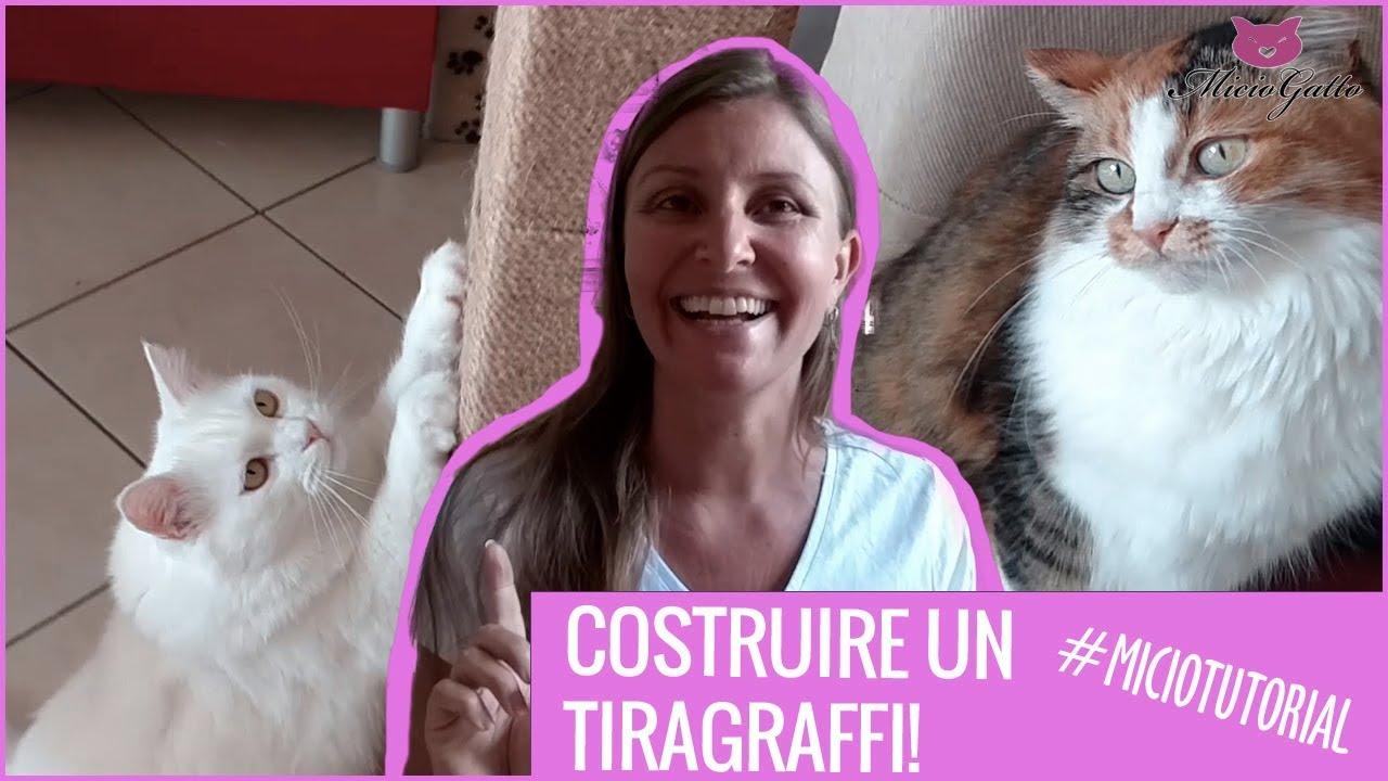Costruire Lettiera Per Gatti come costruire un tiragraffi: il tutorial - miciogatto.it