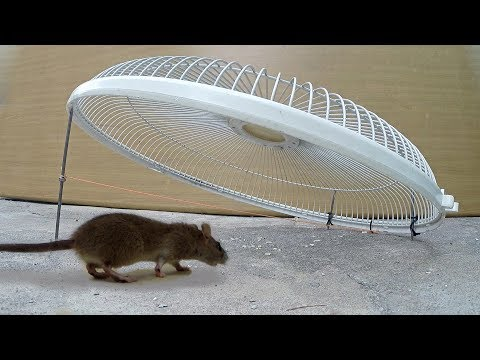 Electric fan guard Mouse/Rat Trap