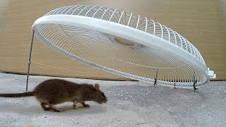 Electric fan guard Mouse / Rat Trap