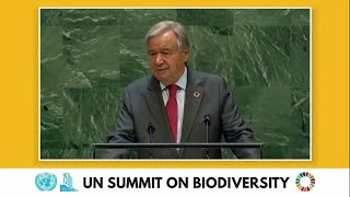 'Humanity is waging war on nature' – UN Chief