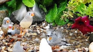 Natural Aviary