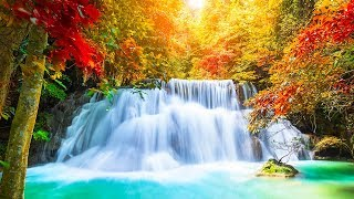 Relaxing Music 24/7, Meditation, Healing, Zen, Sleep Music, Calm Music, Sleep, Yoga, Study, Relax
