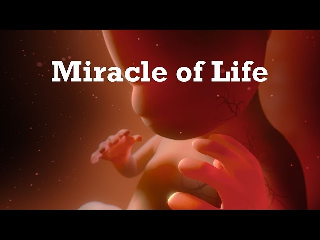 Miracle Of Life - 360 Video