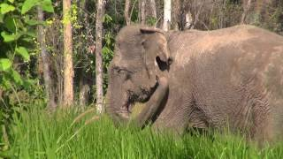 Two Ex-logger Elephants rescue to Cambodia Wildlife Sanctuary