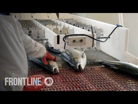 "Can a Fish Farm Be ""Green""? 