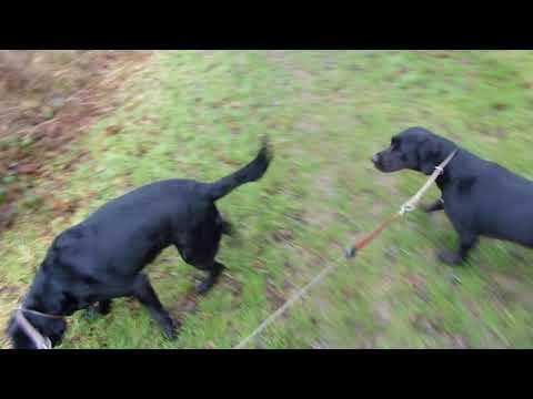Dog Walking vlog 5