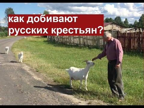 Как добивают русских