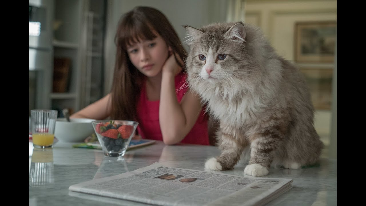 9 жизней кота кино
