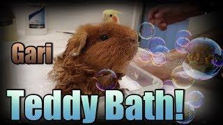 Teddy Guinea Pig Bath with Gari