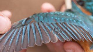 Curs d'identificació d'aus. 1- Introducció a l'observació de les aus