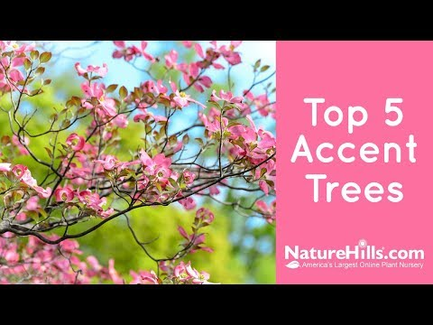Top 5 Accent Trees | NatureHills.com