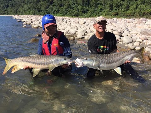 The Hunt For Himalayan Golden Mahseer