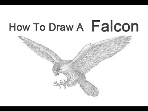 how to draw a peregrine falcon