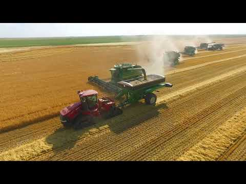 Sovereign Farming Company  2017 Harvest - Beautiful Barley Crop by Hendy Productions.com