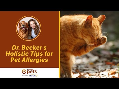 Dr. Becker's Holistic Tips for Pet Allergies