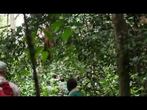 Elephant 3 - Lopé National Park, Gabon