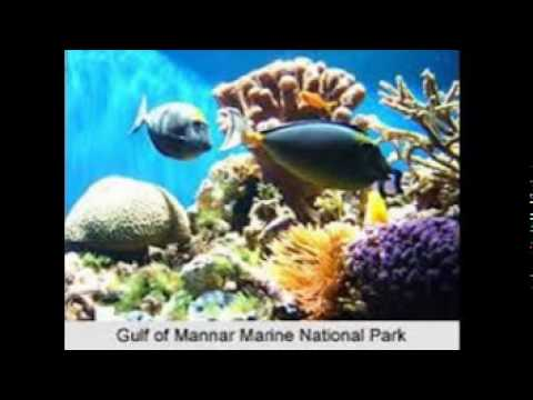 Gulf of Mannar Marine National Park