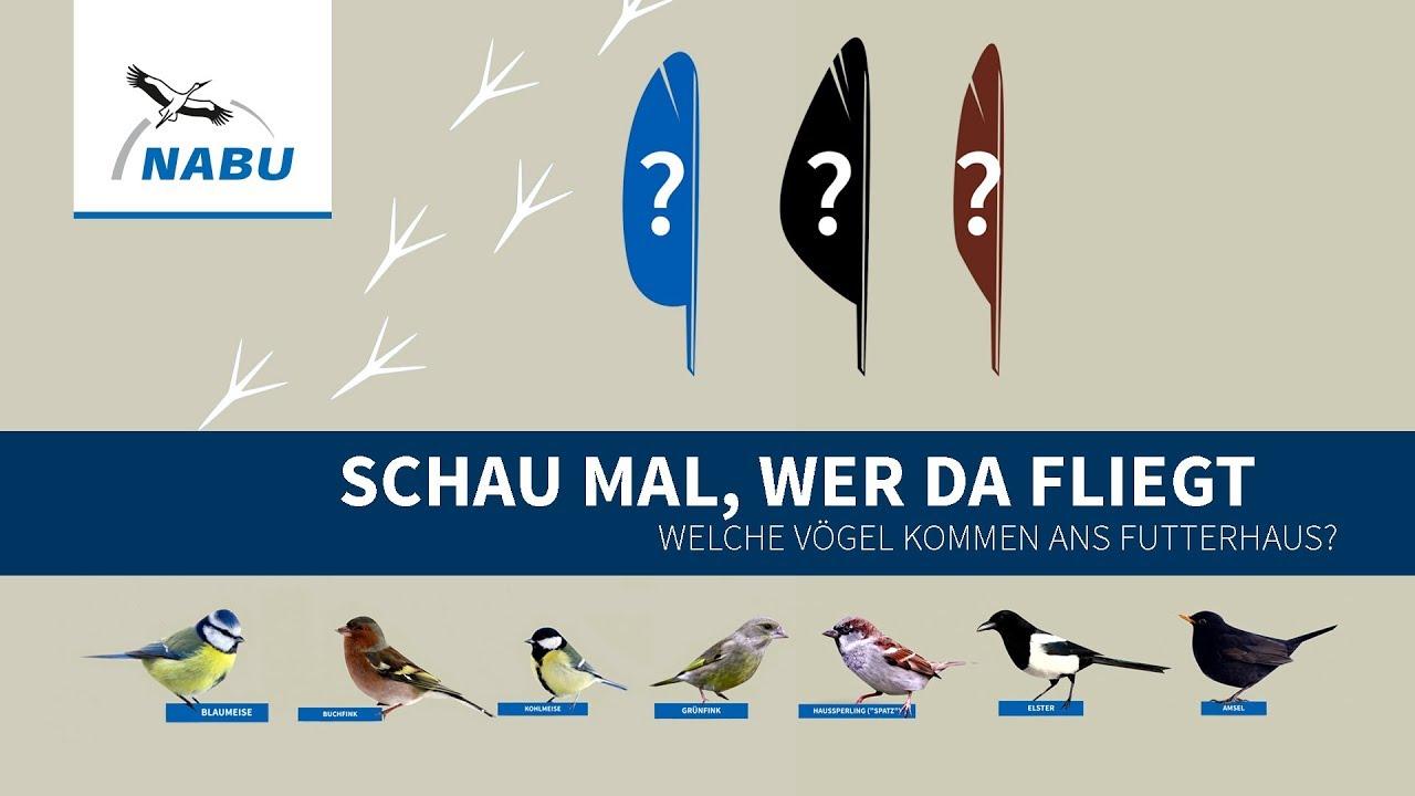 Top 10 Diese Vögel kommen ans Futterhaus - YouTube