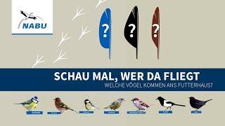 Top 10: Diese Vögel Kommen Ans Futterhaus